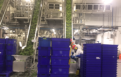 our commitment - in the plant