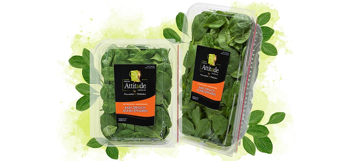 fresh-attittude-baby-spinach-5oz-11oz-watercolor